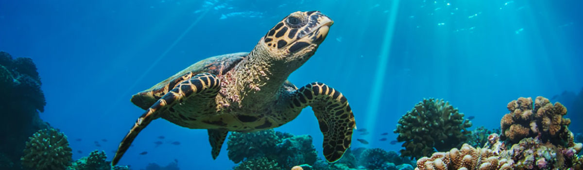 Diving & Snorkeling in the Maldives: 5 Sites for Beginners to Advanced