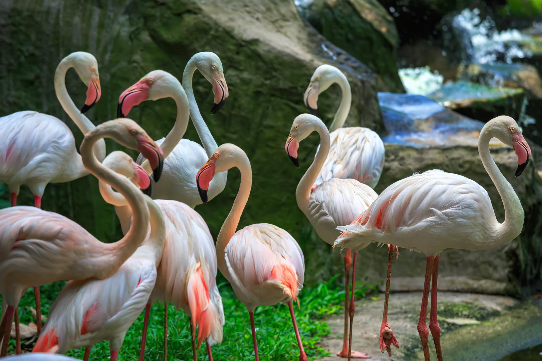 Kuala Lumpur Bird Park_Malaysia