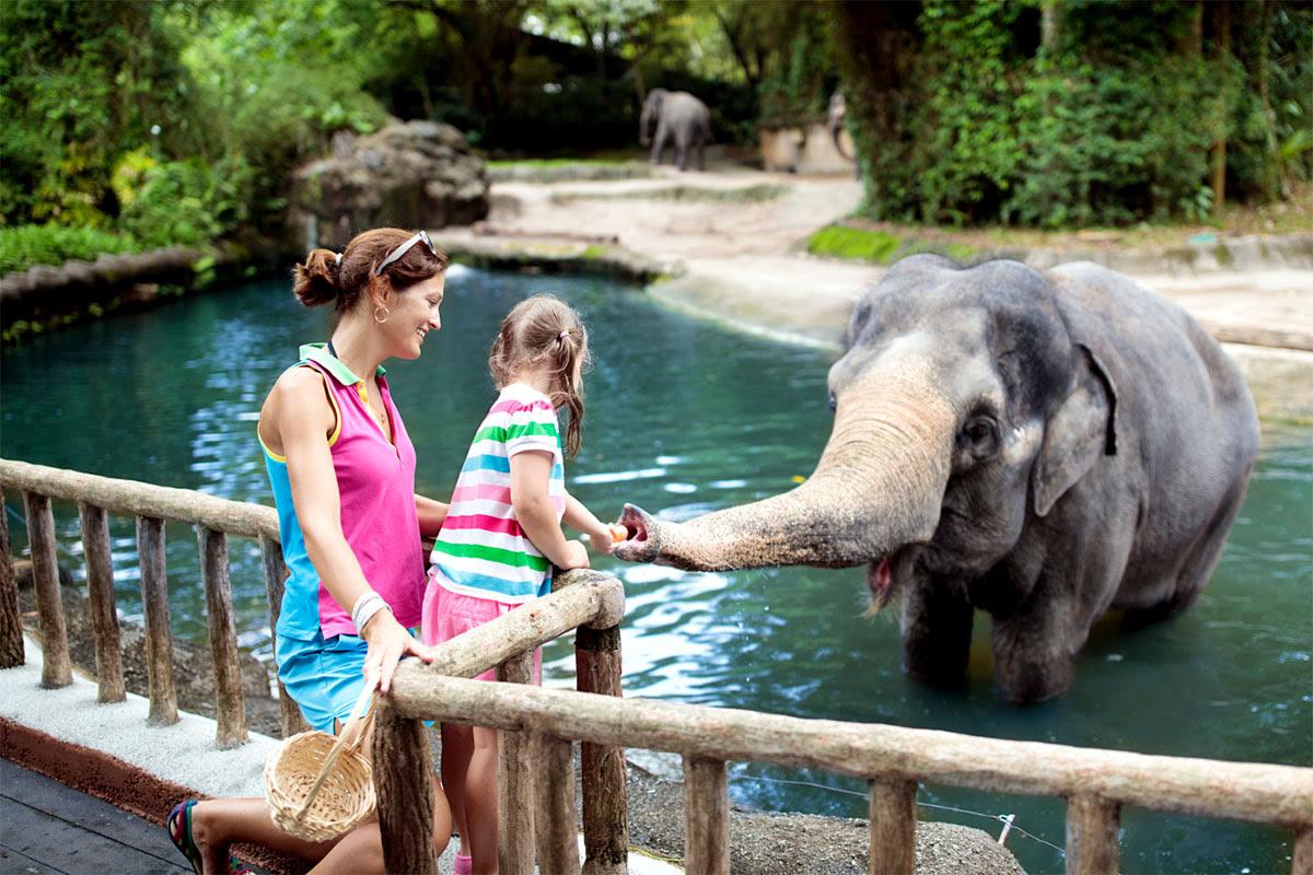 Singapore Zoo_Night Safari